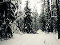 Зимний лес - panoramio (9).jpg
