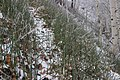 Зимний хвощ. Сюктерка. Чебоксарский р-н. Чувашия. Ноябрь 2014 - panoramio.jpg