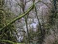 Колхидский лес в долине реки Хосты.jpg