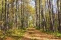Лесные тропы MG 4920.jpg