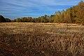 Лесок вдоль пересыхающего ручья - panoramio.jpg