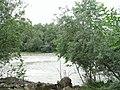 Облепиховая роща, Пойма р. Малый Зеленчук, 02.jpg