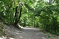 Парк Берёзовая роща в Киеве. Фото 38.jpg