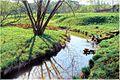 Речка Пажа - panoramio.jpg