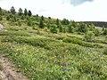 Цветочки - panoramio (5).jpg