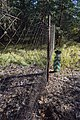 Чапля DSC 0425.jpg