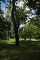 Юннатський парк, Тіниста вулиця.jpg