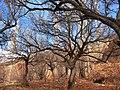 بر درخت زنده بی برگی چه غم ؟ وای بر احوال برگ بی درخت - panoramio.jpg