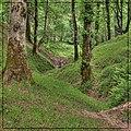 جنگل دالیخانی .jpg