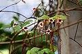 พรรณไม้งามอร่ามสวนหลวง ร.๙ ครั้งที่ 31 ประจำปี 2561 (178).jpg