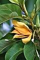 สวนสมเด็จพระนางเจ้าสิริกิติ์ (Queen Sirikit Park) IMG 6910.jpg
