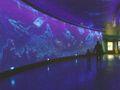 北京海洋馆2.JPG