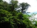 拉拉山 Lalashan - panoramio.jpg