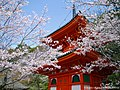 桜と紀三井寺(Kimii-dera Temple with Cherry blossoms) 02 Apr, 2016 - panoramio.jpg
