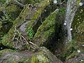 石苔 Moss on Rocks - panoramio.jpg