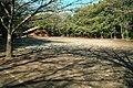 綱島公園 - panoramio.jpg