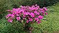 美麗的花朵.jpg