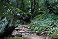 青山瀑布步道 - panoramio (3).jpg