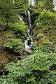 0 Jardin botanique alpin La Jaÿsinia - Samoëns (4).JPG