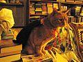 1461685 Cat-Dracula-2 620.jpg