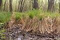 15-05-09-Biosphärenreservat-Schorfheide-Chorin-Totalreservat-Plagefenn-DSCF5532-RalfR.jpg