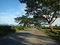 1567Franciso Viola Highway San Rafael Bulacan 05.jpg
