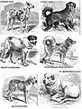 1853-dogs 02.jpg