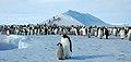 2007 Snow-Hill-Island Luyten-De-Hauwere-Emperor-Penguin-03.jpg