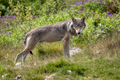 20130711 Wolf IMG 8042.png