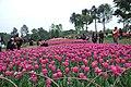 2014-04-04 石象湖 郁金香 liuzusai - panoramio (32).jpg