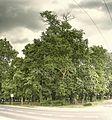 20150626 dic szlichtyngowa park-pah-3e-mk-a.jpg