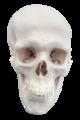 3DPrinted skull 20151124090811.png