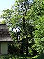 617683 A 683 Krakow Krzesławice Wankowicza 25 park w zespole dworsko parkowym 52.JPG