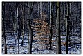 82 365 Winter Woods (5557392590).jpg