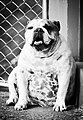 A dog (01).jpg