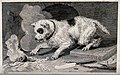 A dog with a dappled coat is trying to touch a hot object th Wellcome V0021872.jpg