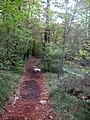 A passeggio nel Bosco...le mie scarpinate - panoramio (2).jpg