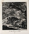 A wild boar resting under a tree in the forest. Etching by J Wellcome V0021061EL.jpg