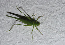 Ab insect 005.jpg