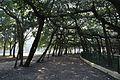 Acharya Jagadish Chandra Bose Indian Botanic Garden - Howrah 2011-01-08 9721.JPG