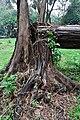Acharya Jagadish Chandra Bose Indian Botanic Garden - Howrah 2011-02-20 1596.JPG