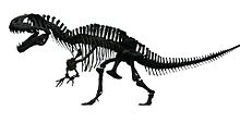 Acrocanthosaurus white background.jpg