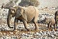 African Elephant Arrival 2019-07-25.jpg