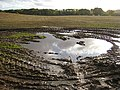 After the rain - geograph.org.uk - 1023177.jpg