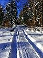Again A Rottweiler - panoramio.jpg