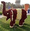 Ahmedabad flower show.jpg