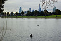 Albert Park Lake swans Stevage.jpg