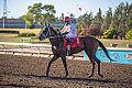 Alberta Breeders' Fall Classic 2014 - Horse Racing (15301538721).jpg
