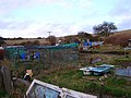 Allotments, South Heighton - geograph.org.uk - 123533.jpg
