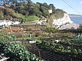 Allotments with a view in Beer - geograph.org.uk - 1069661.jpg